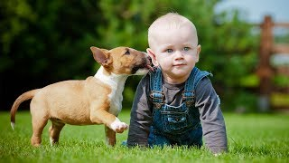 Puppies and Babies Playing Together Compilation (2017)