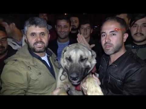 Antalya'da  konsolosluk onunde kopekli protesto