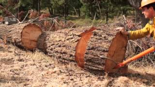 Bucking & Splitting The Big Wood