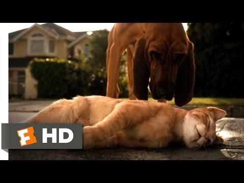 Xxx Mp4 Cats Dogs 1 10 Movie CLIP Catnapped 2001 HD 3gp Sex