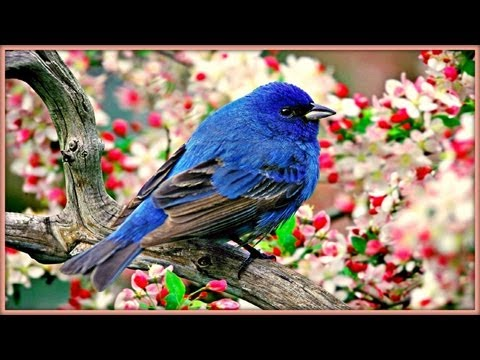 ❀ Sound Therapy ~ Morning Birds ~