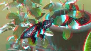 The butterflies 3D anaglyph