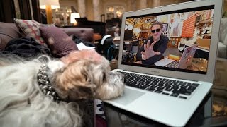 Sad Dog Reacts to Casey Neistat Ending His Vlog