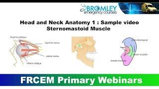 FRCEM Primary Webinar: Head Neck Anatomy 1 - Sample Video