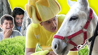 فوزي موزي وتوتي – حمار للبيع – Donkey for sale