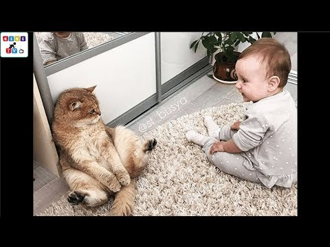A cute baby and a cat A baby and a cat play extremely funny