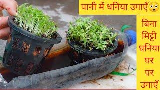 बिना मिट्टी-सिर्फ पानी में धनिया उगाएँ।Grow Dhaniya without Soil|Grow Coriander in Water|