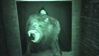 An American Werewolf in London : Night Vision  - Halloween Horror Nights 2014 Universal Studios