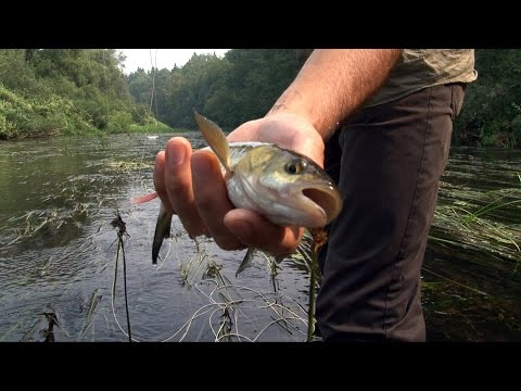 видео рыбалка нахлыст как ловить
