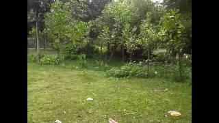 কুমিল্লা বাঘমারা জয়নগর দক্ষিণ পাড়া জামে মাসজীদ