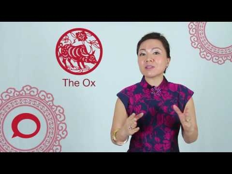 The Ox 2017 Chinese Zodiac Predictions With Jessie Lee The Coverage