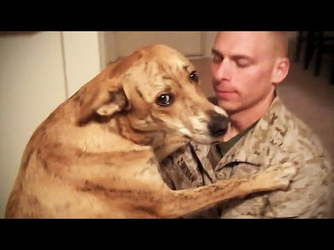 TRY NOT TO CRY Dogs Meet Their Owner After Long Time II NEW HD Funny Pets