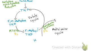 Folate and Methionine cycle