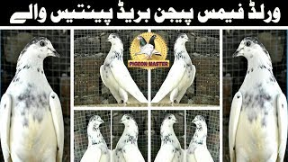 FAMOUS PIGEONS BREED 35 WALY