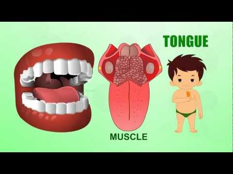 Xxx Mp4 Tongue Human Body Parts Pre School Animated Videos For Kids 3gp Sex