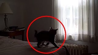 5 Creepy Times CATS Were Seeing Things Their Owners Couldn't!