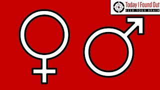 The Origin of the Male and Female Symbols