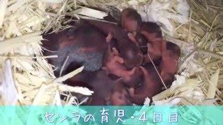 【パンダ柄】出産4日目【子育て】