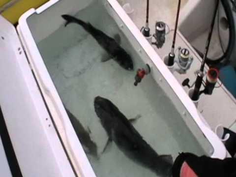 pré fishing st vaast la hougue 2011