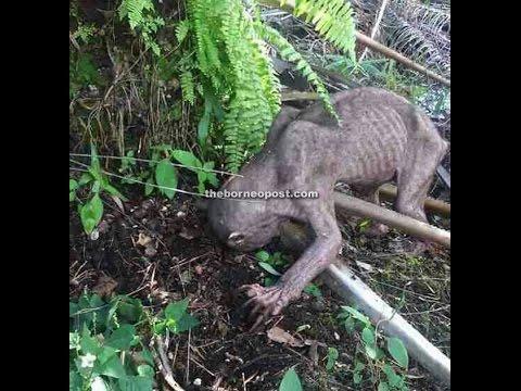 Strange Animal in Borneo Need Help