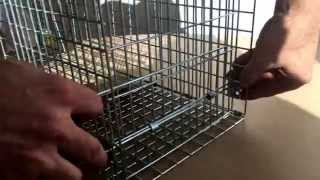 How to construct your Pestrol Possum / Cat Traps