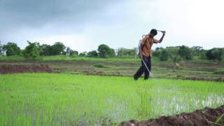 How to Use Biofilm Biofertilizer for Paddy / Rice 720P (Tamil)