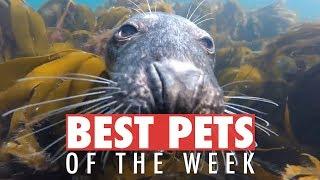Best Pets of the Week | July 2018 Week 3