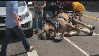 Carriage Horse falls in Downtown Charleston