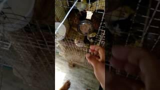 Bajri And Coctel Birds Super Food