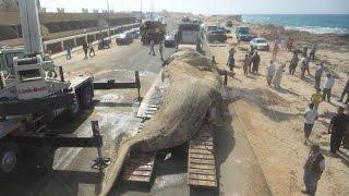 حوت مرسى مطروح