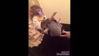 pc mobile Download Best of whatsapp comedy