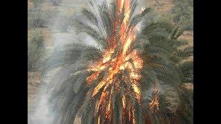 صاعقة البرق أحرقت نخلة في المدينة