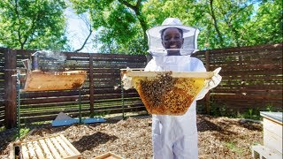Meet Mikaila: 12-year-old CEO, entrepreneur and bee conservationist