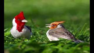 Beautiful Birds Photography of The World|Prettiest Birds|Birds Picture| Love Birds|Birds Photos