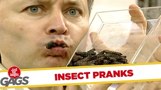 Eating Live LARVA/BUGS - Best of Just For Laughs Gags