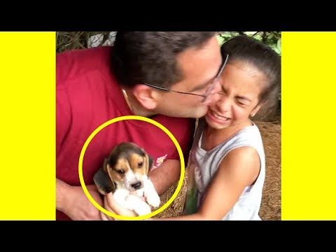 These Families Getting Surprised With ADORABLE Pets Will Make You Happy