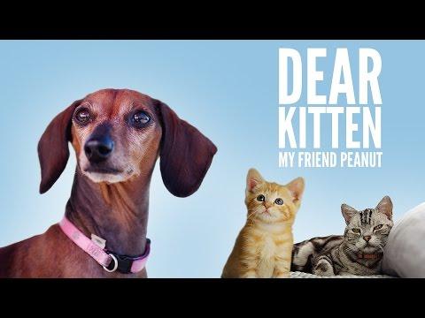 Dear Kitten My Friend Peanut