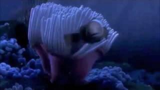 Finding Nemo - Nemo Egg Scene