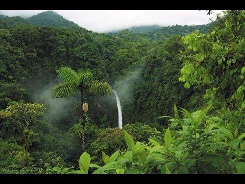 Xxx Mp4 ये है दुनिया का सबसे खूबसूरत और बड़ा जंगल 3gp Sex