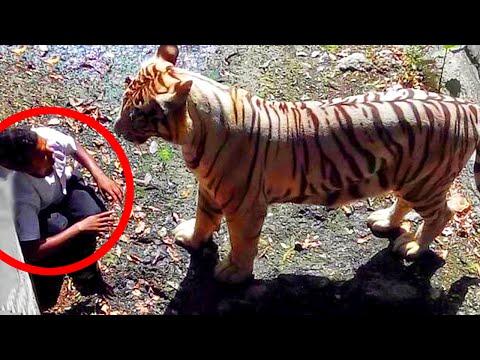 8 Most Shocking Animal Attacks Caught on Tape