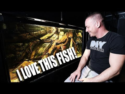 My favourite fish of ALL TIME with The king of DIY