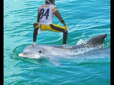 Antonio Brown TWERKS On Dolphin After 2 Touchdowns Matt Moore Knocked Out By Bud Dupree Sack