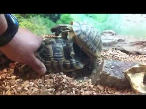 Xxx Mp4 Turtle Rape Sex Xxx 3gp Sex