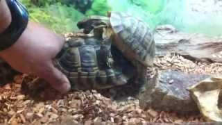 Turtle rape sex :-) xxx