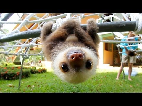 Xxx Mp4 What Does A Sloth Say 3gp Sex