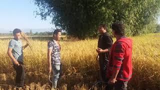 Rajbanshi short comedy