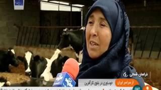 Iran Traditional Dairy farming, North Khorasan province پرورش گاو شيرده خراسان شمالي ايران