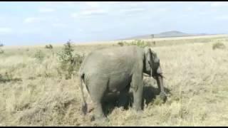 huyu ndie mnyama tembo ndani ya Serengeti National Park(elephant)