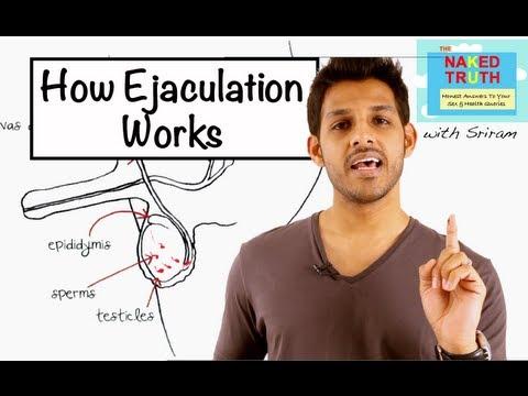 Xxx Mp4 How Ejaculation Works Episode 19 3gp Sex