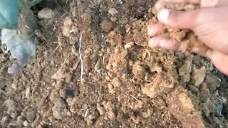 How to make Cowdunk compost the easyeast way to prepair
